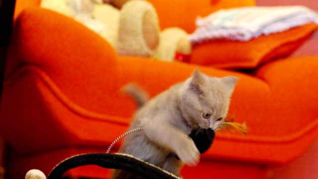 Kitten playing with a toy mouse