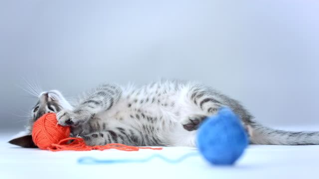 HD: Kitten Playing With Ball Of Wool video