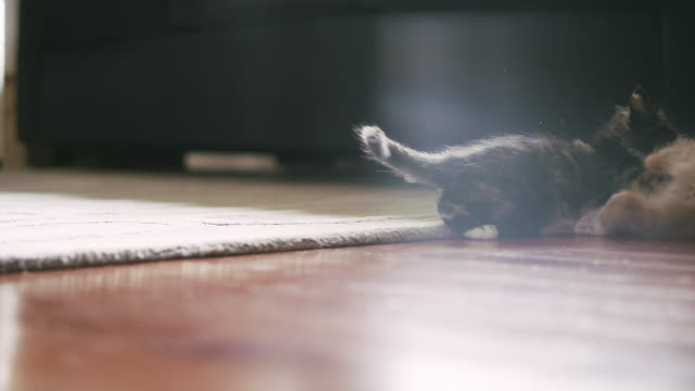 A kitten pounces on another kitten and they start wrestling video