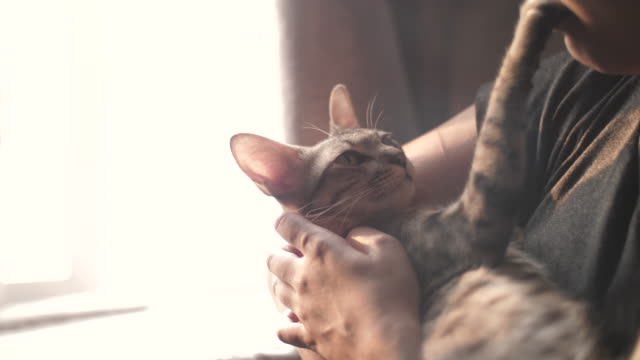 A kitten relaxes in the arms of a woman who pets it.