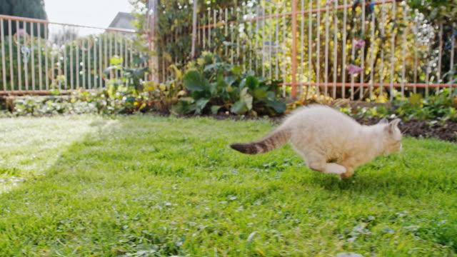 slo mo gattino correre nel cortile dietro casa - soltanto un animale video stock e b–roll
