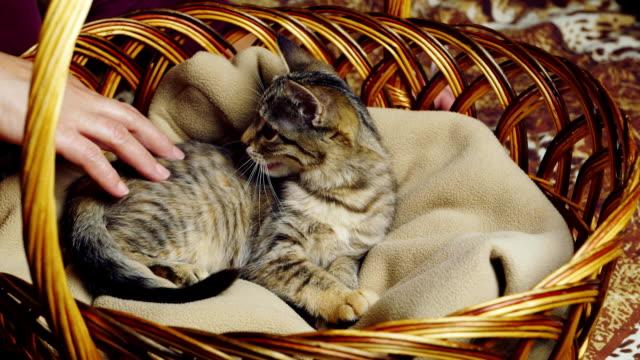 kitten sitting in a basket video