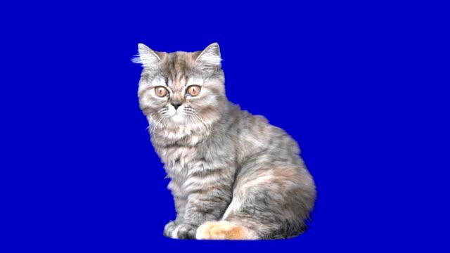 stockvideo's en b-roll-footage met 4k kitten - kitten