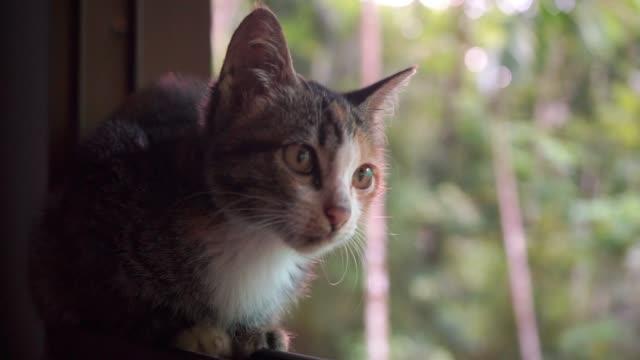 子猫 - ふわふわ点の映像素材/bロール