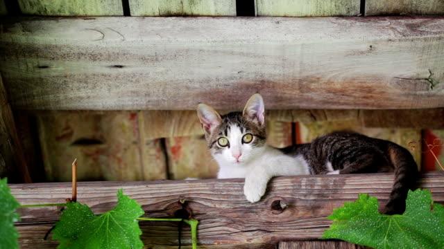 kitten - кошка смешанной породы стоковые видео и кадры b-roll