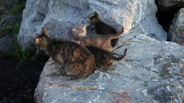kattungar och mamma katt - djurfamilj bildbanksvideor och videomaterial från bakom kulisserna