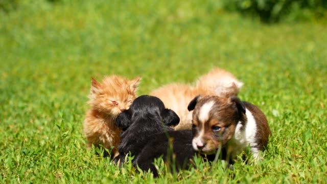 stockvideo's en b-roll-footage met kittens en puppy's spelen op het gras - kitten