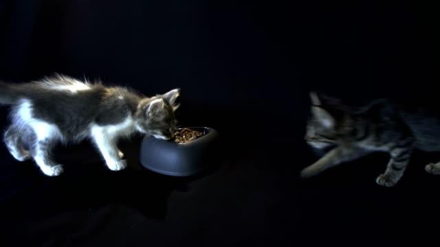 vídeos y material grabado en eventos de stock de kittens comer - vibrisas