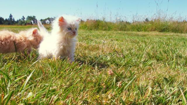 Kittens -- Field Explorers video