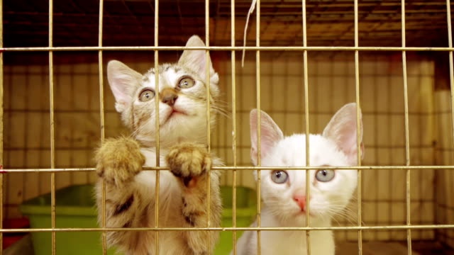 Kittens In Shelter Cage