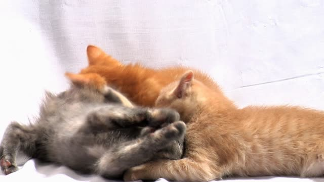 Kittens Play Together video