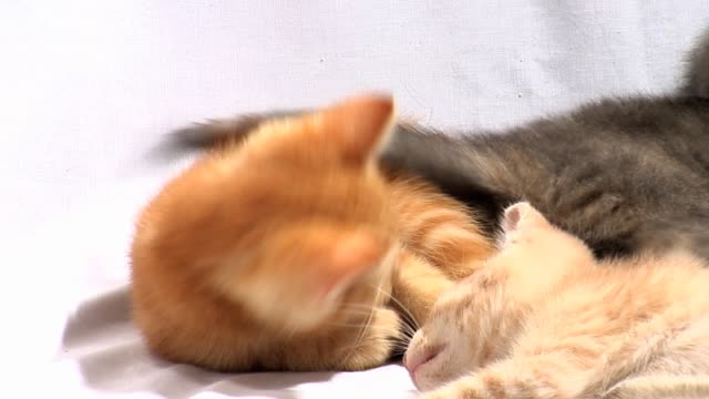 Kittens Play With Tails video