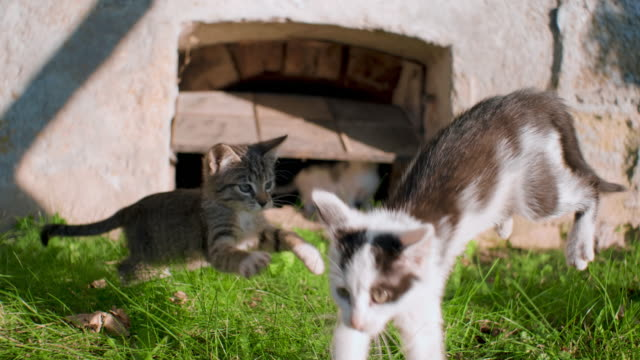 Kittens playing outdoors video