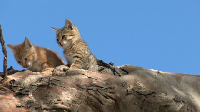 kittens - vídeo