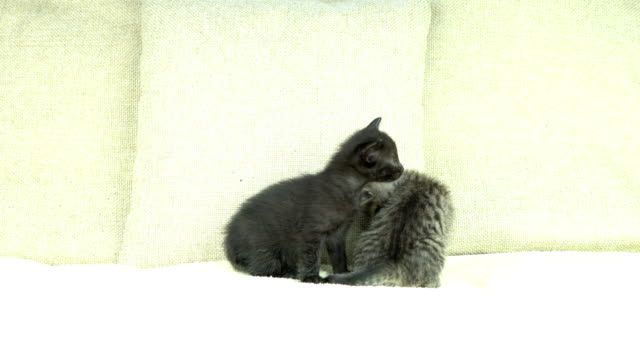 kittens - kawaii video stock e b–roll