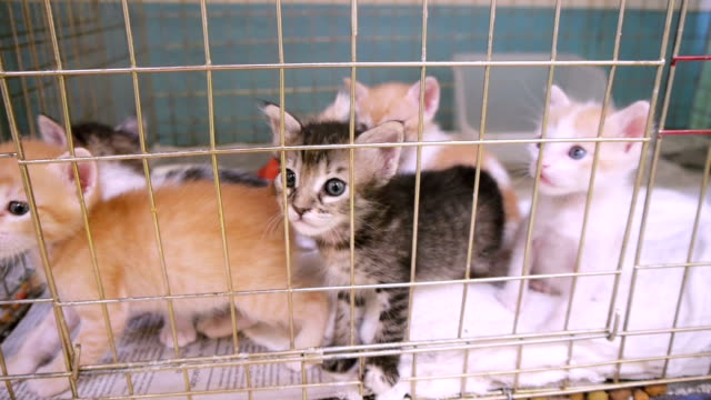 Kitty Litter (HD) Several kittens from a single mother but multiple fathers in a litter or kindle behind a cage.  kitten stock videos & royalty-free footage