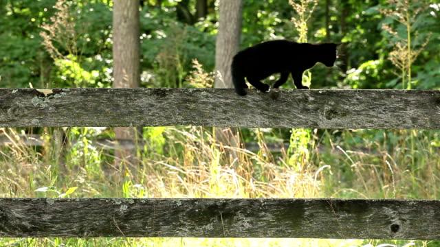 kitty walking fence rail video