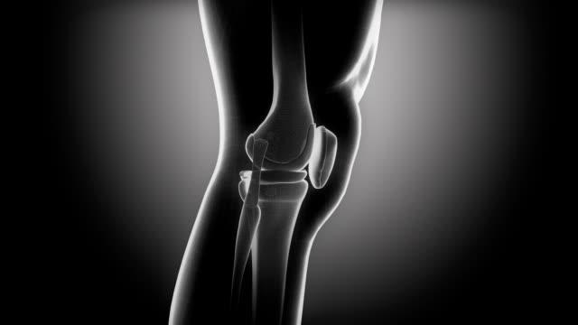 vídeos de stock, filmes e b-roll de joelho humano de loop de raios x - articulação humana
