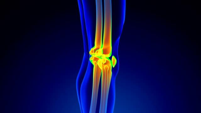 Knee Anatomy Knee anatomy in loop x-ray in 3D view limb body part stock videos & royalty-free footage