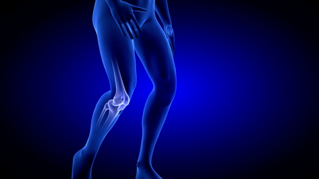 Knee Pain animation. Blue Human Anatomy Body 3D Scan render video