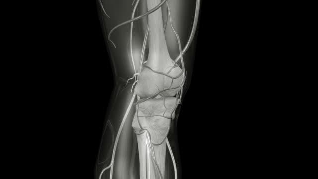 Knee X-ray HD NTSC PAL video