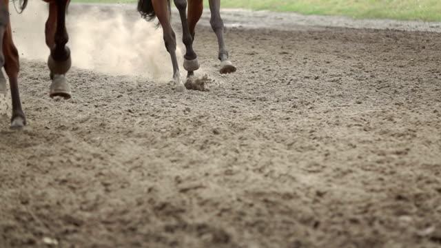 knie von pferden, dass laufen schnell. slow-motion - pferderennen stock-videos und b-roll-filmmaterial
