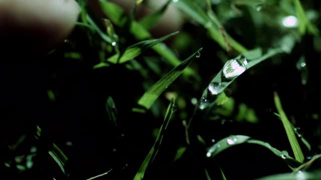 стучать роса на траве - tap water стоковые видео и кадры b-roll