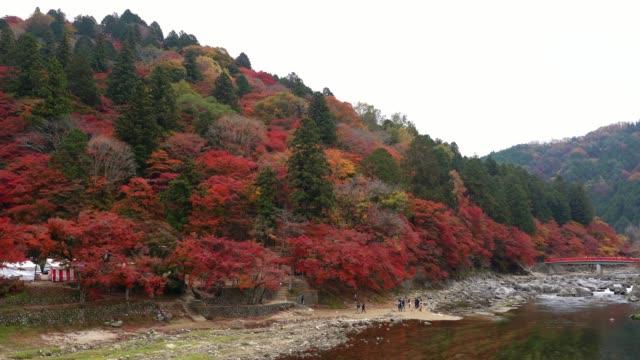 秋の紅葉で有名な名古屋郊外の香嵐渓渓谷。滝の上で楽しむ観光客は、赤いカエデの木を taigetsukyo 赤橋愛知県、中部地方、日本の紅葉祭 - トヨタ点の映像素材/bロール