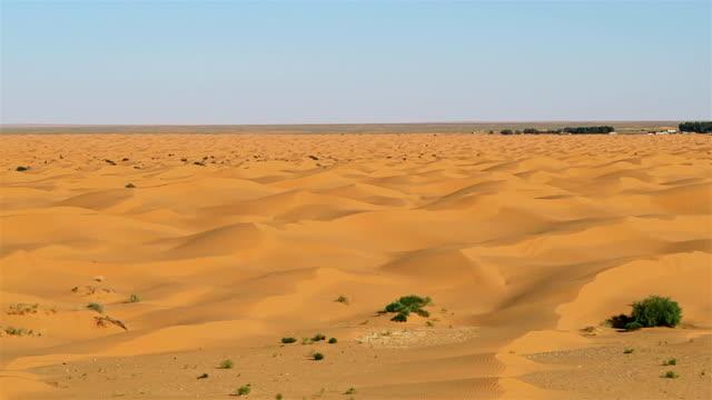 Ksar Ghilane oasis Grand Erg Oriental / Sahara / Tunisia