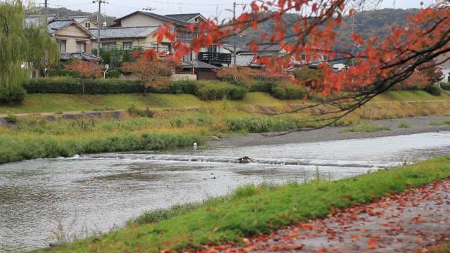 京都川の風景 - 川岸点の映像素材/bロール
