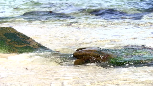 La Jolla California Seal Cove extreme closeup rock water. video