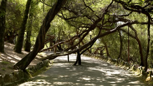 vídeos de stock e filmes b-roll de la salette park in oliveira de azemeis park, portugal - aveiro