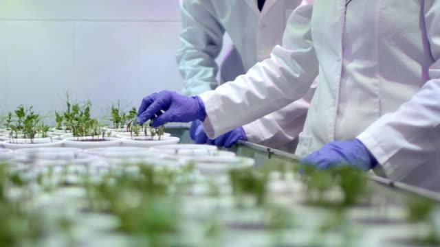 植物を研究している研究室では、研究室助手 - 科学研究点の映像素材/bロール