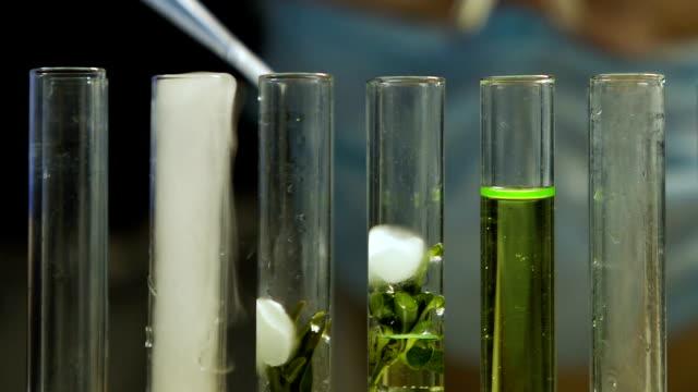 лабораторный эксперт капает жидкость в пробирки с образцом растения, натуральным экстрактом - expert стоковые видео и кадры b-roll