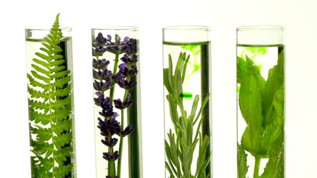 vídeos de stock e filmes b-roll de laboratory, fern, lavender, rosemary and mint in test tubes - lavanda planta