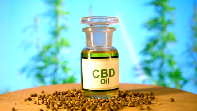 Laboratory of CBD oil, Zedetsin canabis, capsules with oil, marijuana seeds on hemp background. Laboratory of CBD oil, Zedetsin canabis, capsules with oil, marijuana seeds on hemp background. cbd oil stock videos & royalty-free footage