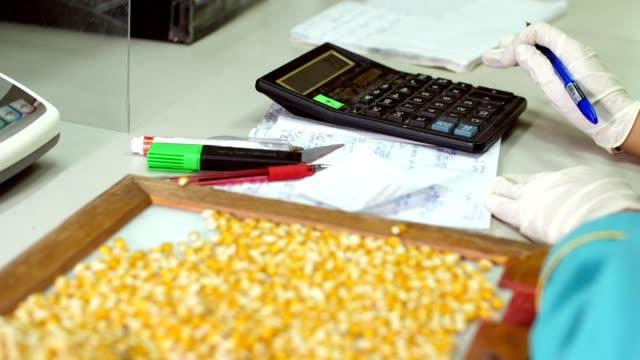 vidéos et rushes de laboratoire de recherche des graines de maïs. échantillons de différentes espèces, variétés de maïs de la sélection. laboratoire d'analyse et de diagnostic du grain sur le terrain. la culture du maïs - seigle grain