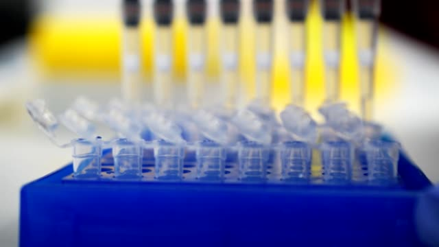 Laboratory test plate. researcher pipetts samples in well microplate. medical test of blood or dna. test of cancer or virus. Scientist researching in laboratory. peronalized medicine and diagnostic video