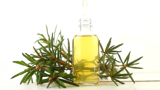 labrador tea essential oil in  beautiful bottle on white background - oli, aromi e spezie video stock e b–roll