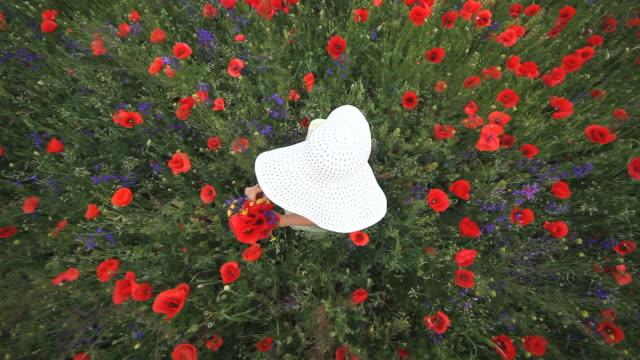 vídeos de stock, filmes e b-roll de senhora com monte branco de chapéu e flores em campo de papoilas vermelhas, vista superior - punhado
