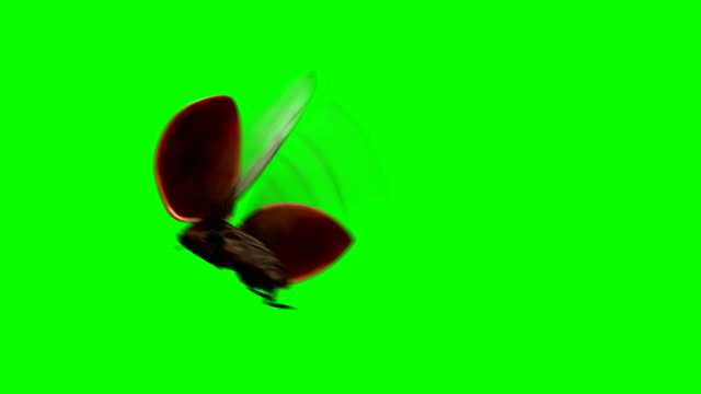 ladybird lands on a green background - жук стоковые видео и кадры b-roll