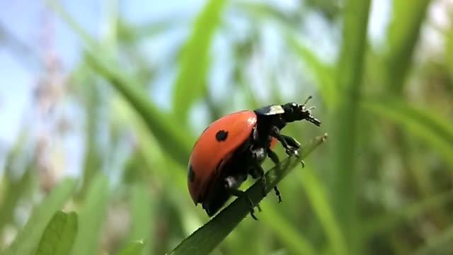 Ladybird takeoff in slow motion