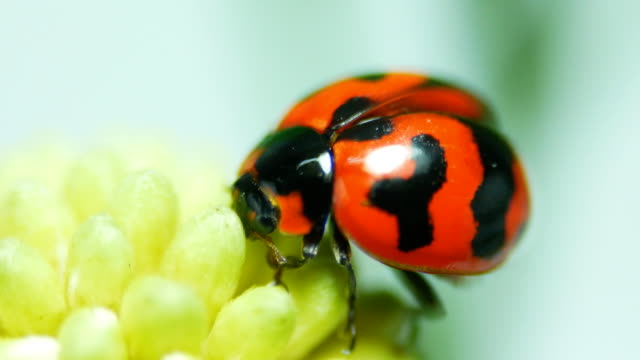 ladybug close-up - жук стоковые видео и кадры b-roll