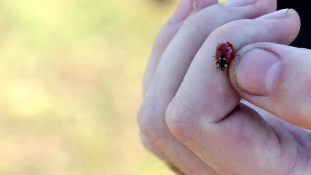 Ladybug crawling on the palm video