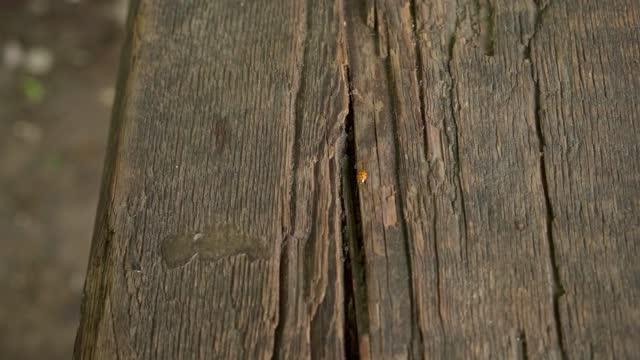 Ladybug crawls on a tree