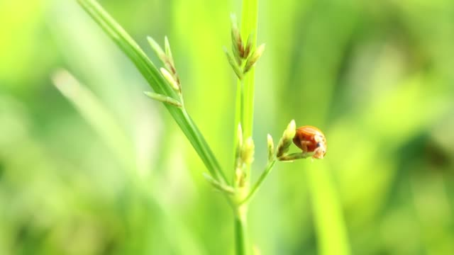 Ladybug on green grass in nature.
