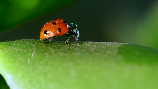 ladybug sitting on blade of grass against blurred nature background
