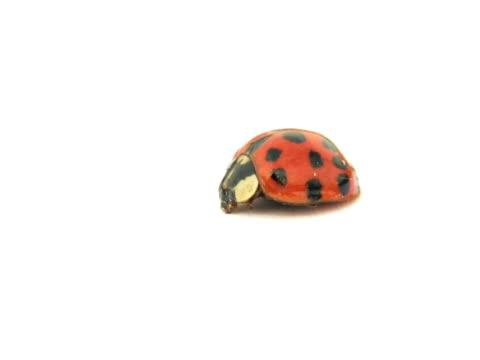 NTSC: Ladybug