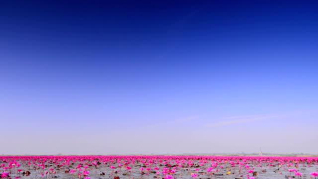 Lagoon video