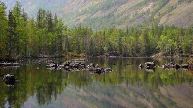 Lake and forest reflection video